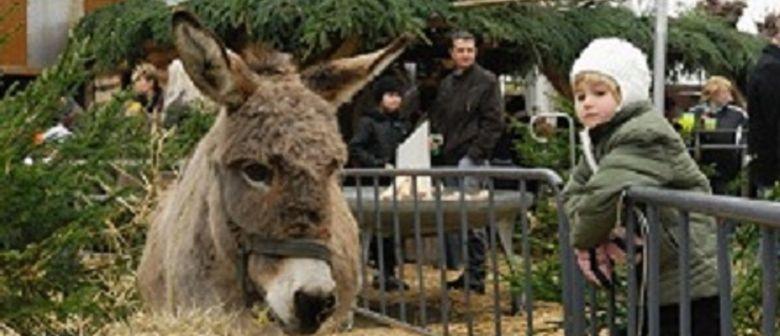 traditionelle Habsburg Weihnachtsparty