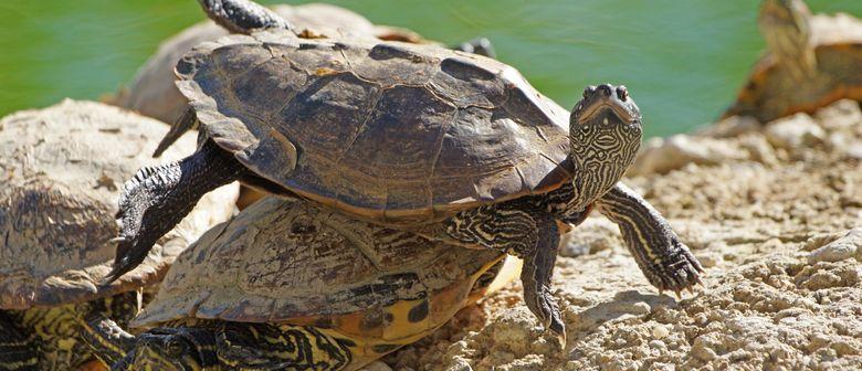 """""""Alles über Schildkröten"""""""