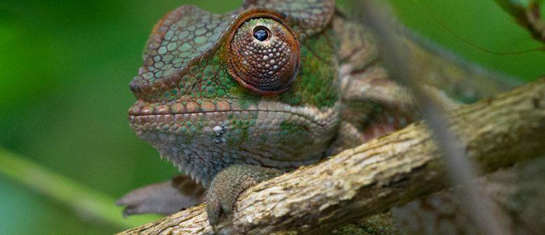 Andreas Peckl: Madagaskar