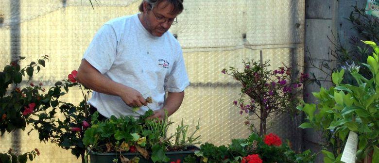 Kübelpflanzen einwintern