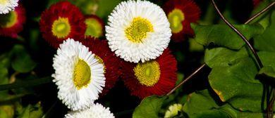 Alte Heilmethoden mit heimischen Heilpflanzen