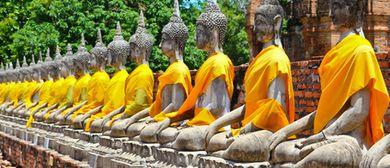 Hatha Yoga für Anfänger & Fortgeschrittene
