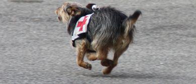 Rettungshundearbeit für Familienhunde