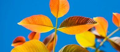 Wechseljahre, Naturheilwissen und Spiritualität
