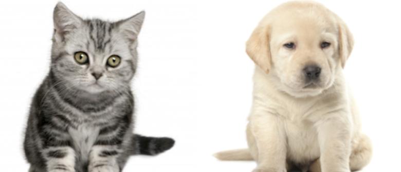 Warum sind so wenige Hunde und Katzen noch wirklich gesund?