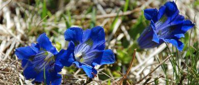 Unterwegs am Blumen-Wander-Lehrpfad