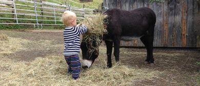 Kleinkindergruppe im Esel- und Pferdestall