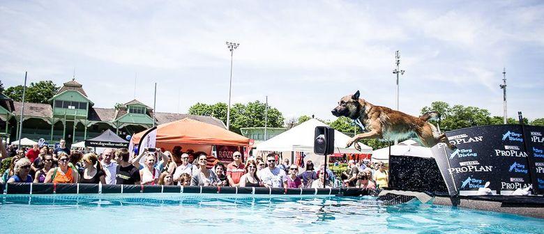 Hundetag Baden – So. 05.juni 2016 von 10-18 Uhr – Trabrennba