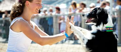 Hundetag Baden 2016