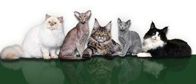 Katzen Weltausstellung Marxhalle
