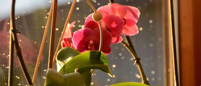 alles ber orchideen lauterach wohintipp
