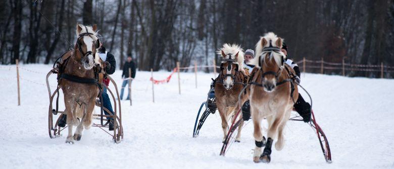 Pferdeschlitten- und Galopprennen 2017