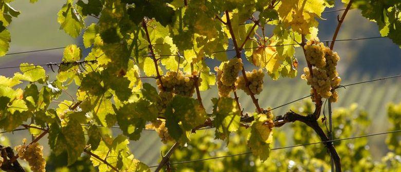 Weißwein ABC bei WEIN & CO Leonding