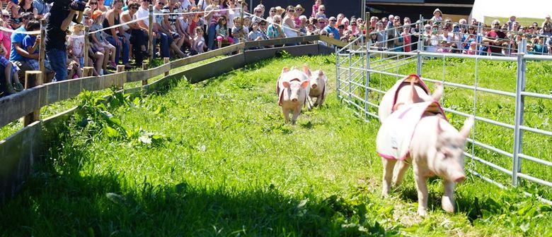 2. Schweinerennen auf Mätzler´s Hoffest