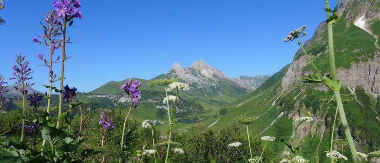 Die alpinen Heilkräuter von Oberhorn     Tageswanderung