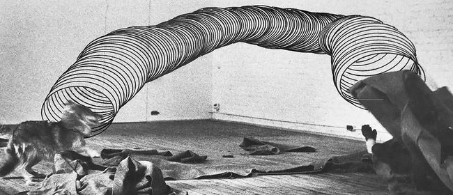Ausstellung: Gottfried Bechtold - 'Coyote'