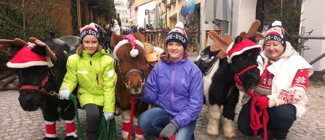 Bludenzer Christkindlemarkt 2017: Ponyreiten