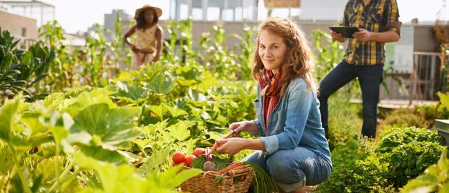Kleiner Garten, Große Ernte auf Balkon und Schrebergarten
