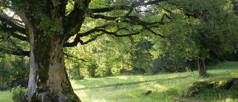 """Bildvortrag """"Baumwelten"""" mit Conrad Amber"""