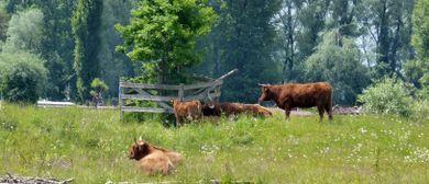 """Exkrusion  """"Was tut das Vieh im Sumpf?"""""""