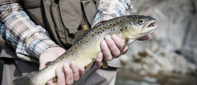 Tafeln im Bregenzerwald - Frisch gefischt: CANCELLED