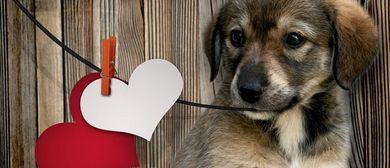 Grillen & Chillen für den Tierschutz