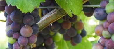 31. Steirisches Weinfest