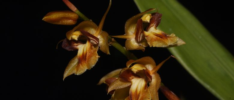 Orchideenclubabend