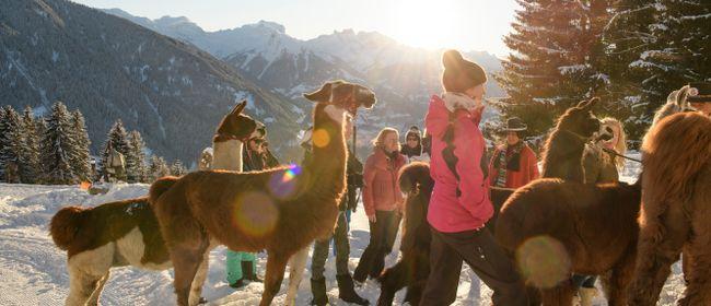 Lama-Trekking in den Sonnenuntergang