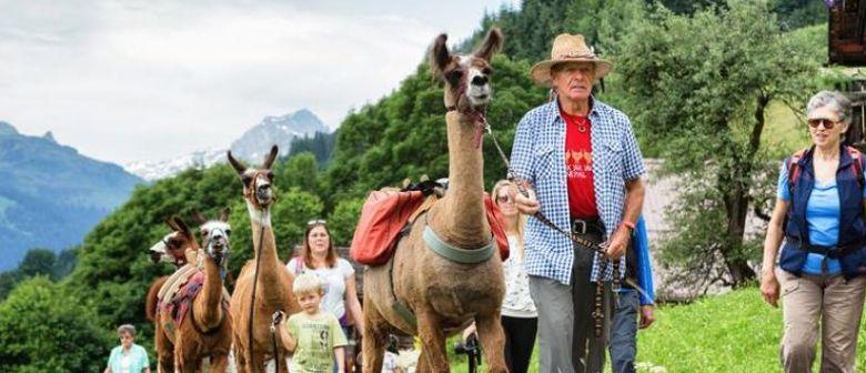 Lama-Trekkingtour auf Bergknappenpfaden
