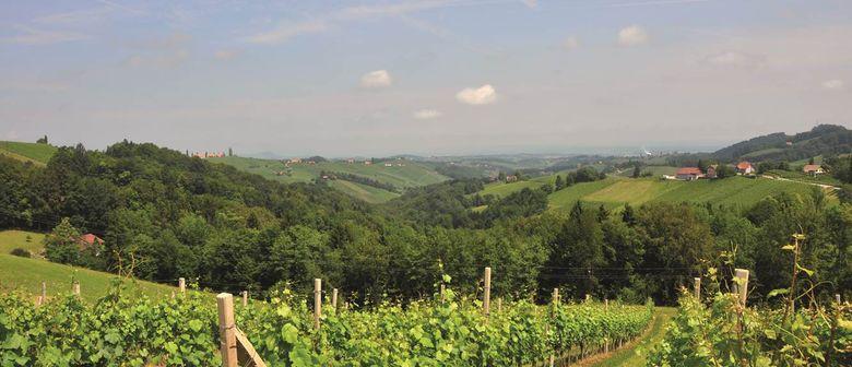 Wein ABC Rund um die Welt