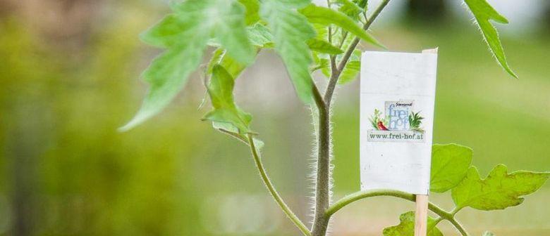 Bio-Jungpflanzenverkauf in der Landstrasse