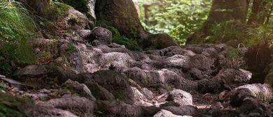 Den Geheimnissen der Pfänderwälder auf der Spur