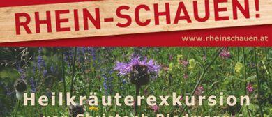 Heilkräuter am Rhein und an den Schleienlöchern