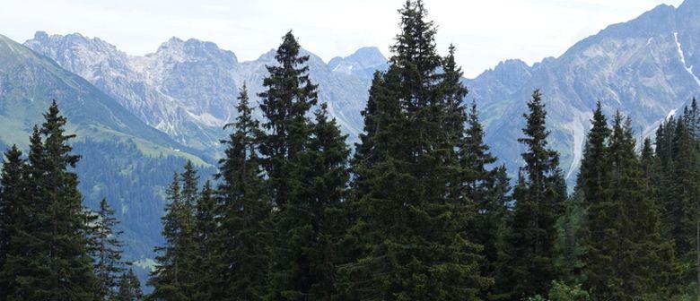 inatura Naturvielfalt – Kurs Wald: CANCELLED