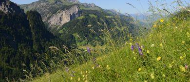 """Kurs - """"Wiesenvielfalt in Vorarlberg"""": CANCELLED"""
