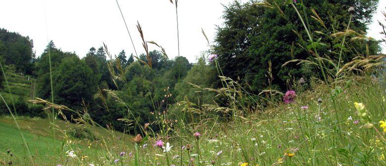"""Exkursion: Die """"Siegerwiesen"""" der Familie Pfefferkorn"""