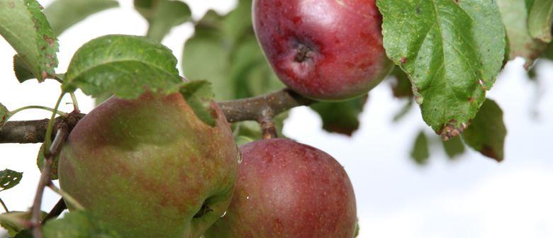 Bio-Obstbaumschnitt & pflegekurs