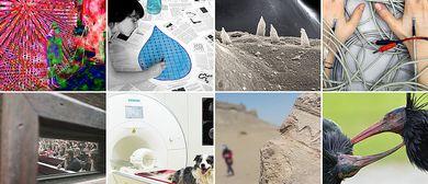 Forschungsbilder 2020. Wissenschaft in Fotografien