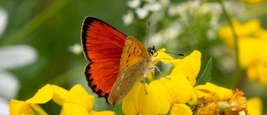 Eintauchen in die faszinierende Welt der Schmetterlinge