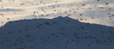 Wo gehen die Vögel hin?