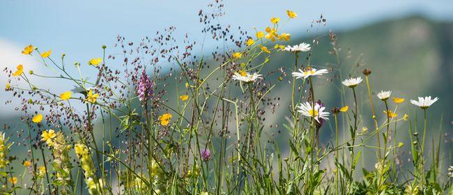 BERGaktiv Unterwegs auf dem Blumen-Wander Lehrpfad
