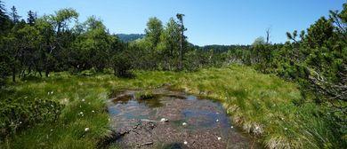 Exkursion: Naturvielfalt im Fohramoos