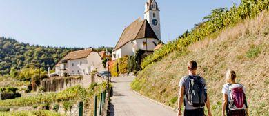 Wein.Genuss.Wandern am Weitwanderweg Kremstal-Donau