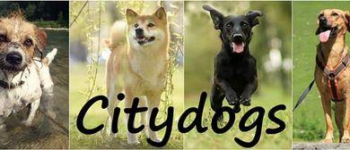 CITYDOGA-Yoga und Fitness mit Hund