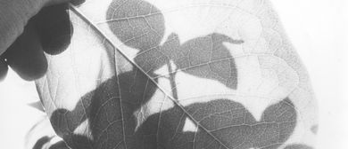 Gespräch und Werkbetrachtung | Historische botanische Bücher: CANCELLED
