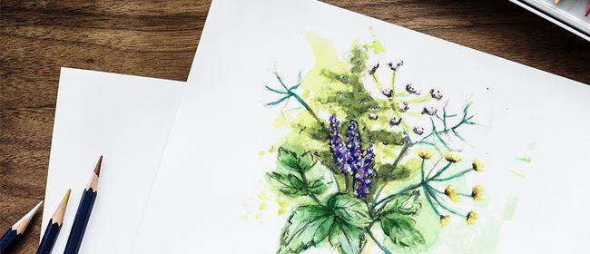 Botanische Zeichnungen –Workshop N°1 mit Stefanie Waldner