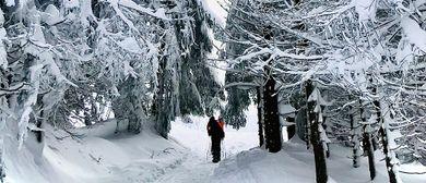 Nacht-Schneeschuhwanderung durch das Fohramoos (geführt)
