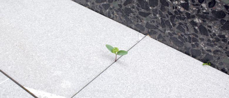 Projektraum «Parlament der Pflanzen»: CANCELLED
