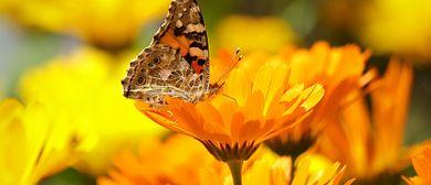 Pures Sonnenlicht, Johanniskraut, Ringelblume, Sonnenblume